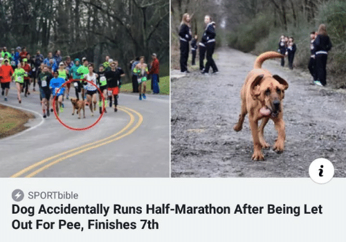 marathon: i  SPORTbible  Dog Accidentally Runs Half-Marathon After Being Let  Out For Pee, Finishes 7th