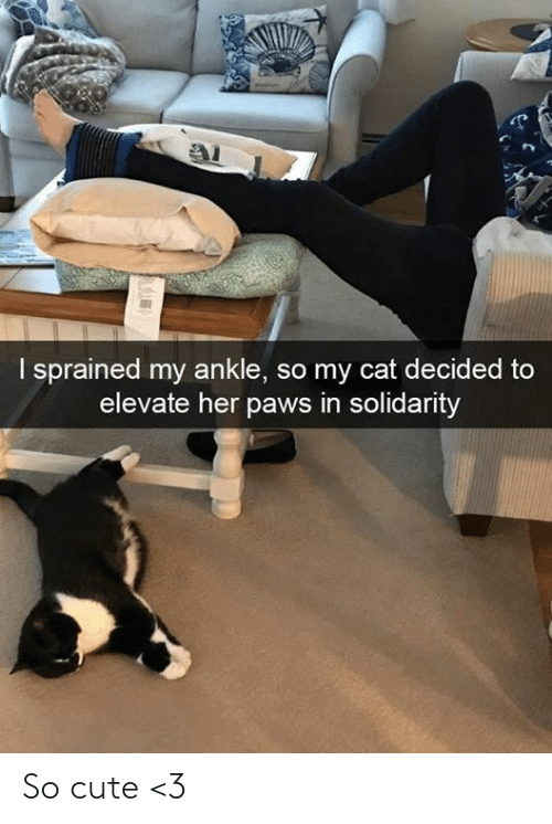 solidarity: I sprained my ankle, so my cat decided to  elevate her paws in solidarity So cute <3