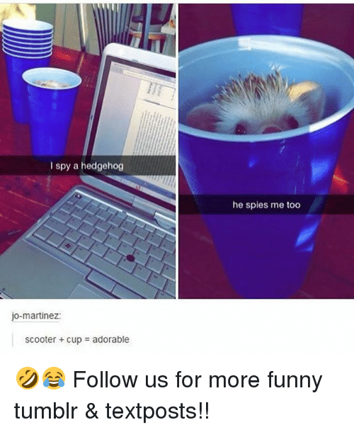 Hedgehoging: I spy a hedgehog  jo-martinez  scooter cupa adorable  he spies me too 🤣😂 Follow us for more funny tumblr & textposts!!