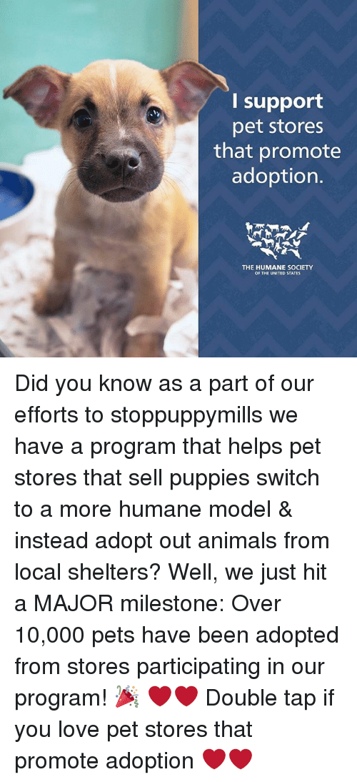 pet stores that sell puppies funny wells memes of 2017 on sizzle calculated 4231