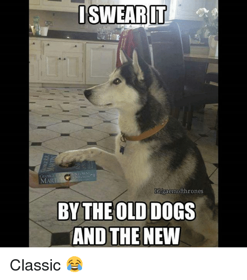 Dogs, Memes, and Old: I SWEAR IT  ofthrones  BY THE OLD DOGS  AND THE NEW Classic 😂