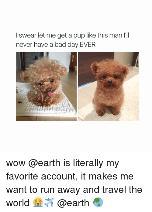 Girl Memes: I swear let me get a pup like this man l'll  never have a bad day EVER wow @earth is literally my favorite account, it makes me want to run away and travel the world 😭✈️ @earth 🌏