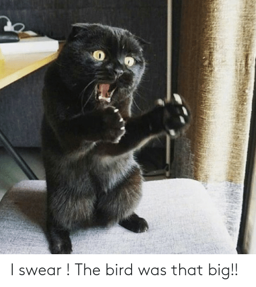 bird: I swear ! The bird was that big!!