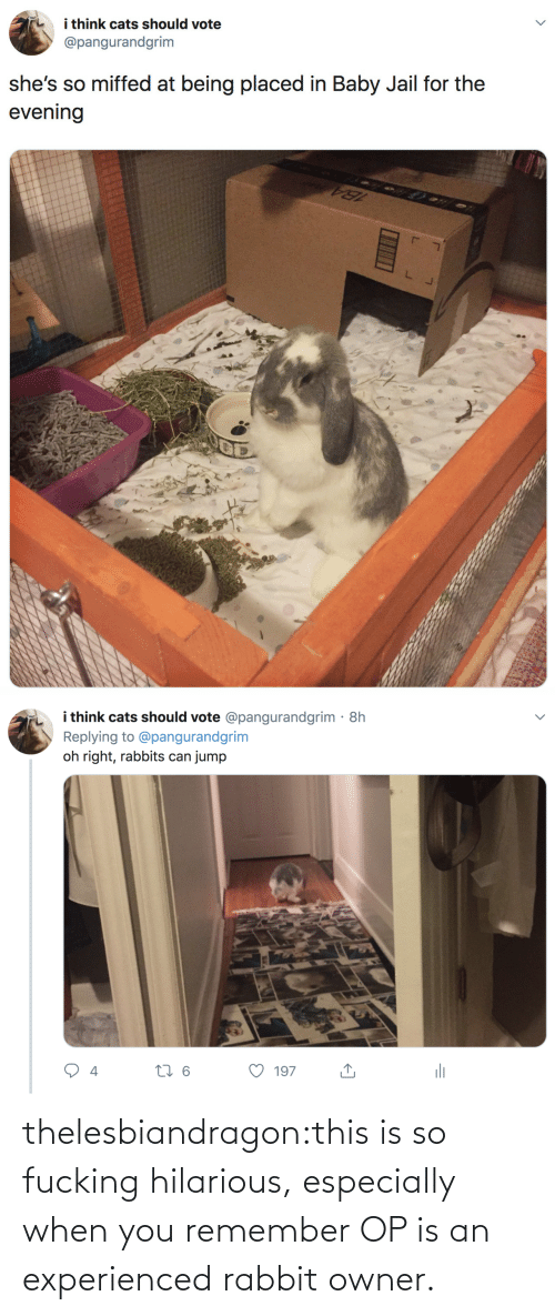 evening: i think cats should vote  @pangurandgrim  she's so miffed at being placed in Baby Jail for the  evening   i think cats should vote @pangurandgrim· 8h  Replying to @pangurandgrim  jump  oh right, rabbits can  li  27 6  197  4 thelesbiandragon:this is so fucking hilarious, especially when you remember OP is an experienced rabbit owner.