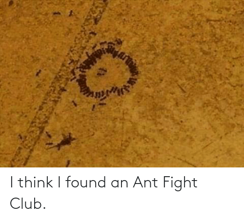 Fight Club: I think I found an Ant Fight Club.