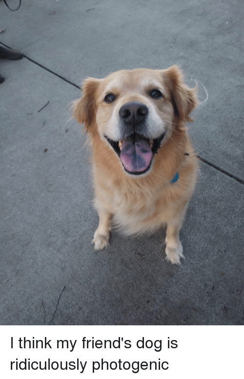 Friends, Puppy, and Dog: I think my friend's dog is ridiculously photogenic