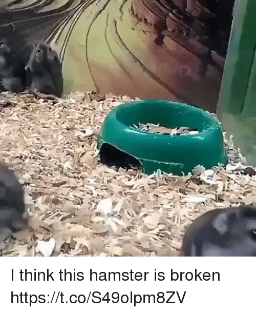 Hamster, Relatable, and Think: I think this hamster is broken https://t.co/S49olpm8ZV