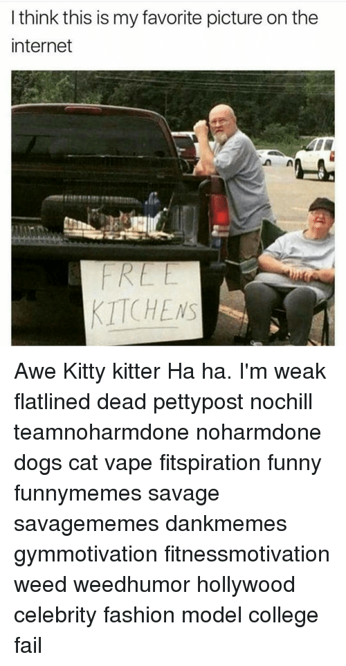 awe: I think this is my favorite picture on the  internet  KITCHENS Awe Kitty kitter Ha ha. I'm weak flatlined dead pettypost nochill teamnoharmdone noharmdone dogs cat vape fitspiration funny funnymemes savage savagememes dankmemes gymmotivation fitnessmotivation weed weedhumor hollywood celebrity fashion model college fail