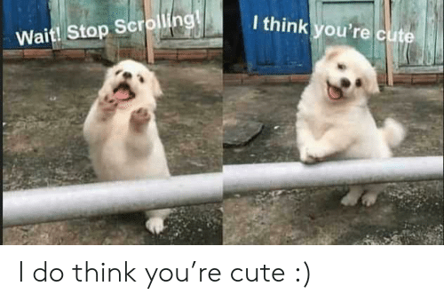 Youre Cute: I think you're cute  Wait! Stop Scrolling! I do think you're cute :)
