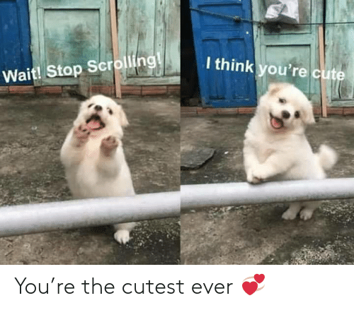 Youre Cute: I think you're cute  Wait! Stop Scrolling! You're the cutest ever 💞