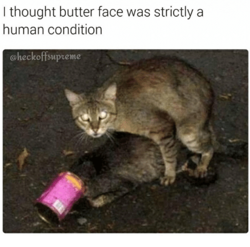 butter face: I thought butter face was strictly a  human condition  aheckoffsupreme