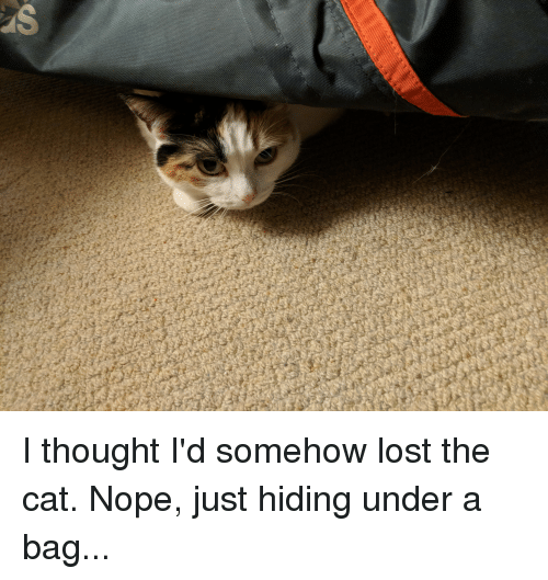 Lost, Nope, and Thought: I thought I'd somehow lost the cat. Nope, just hiding under a bag...