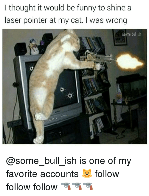 Memes, 🤖, and Cat: I thought it would be funny to shine a  laser pointer at my cat. I was wrong  Csome bulLish @some_bull_ish is one of my favorite accounts 🐱 follow follow follow 🔫🔫🔫