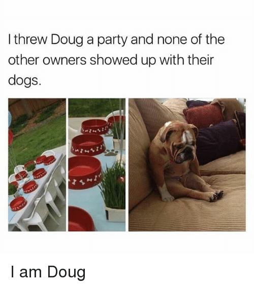 Douge: I threw Doug a party and none of the  other owners showed up with their  dogs. I am Doug
