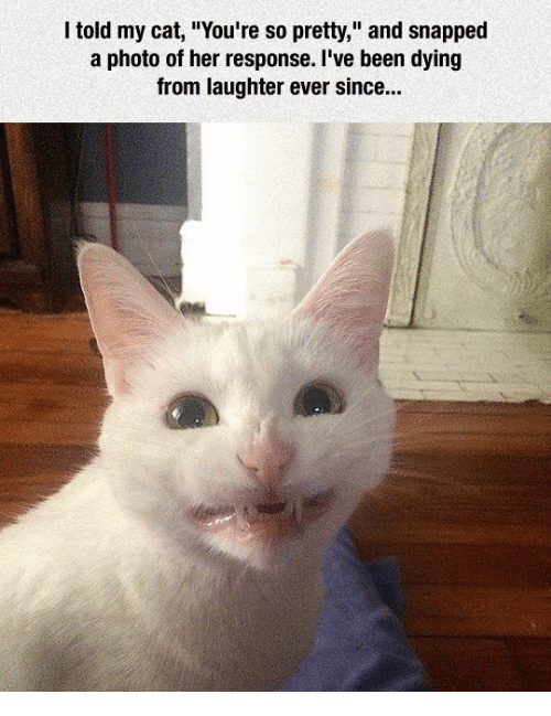 """Grumpy Cat, Laughter, and Responsibility: I told my cat, """"You're so pretty,"""" and snapped  a photo of her response. I've been dying  from laughter ever since..."""