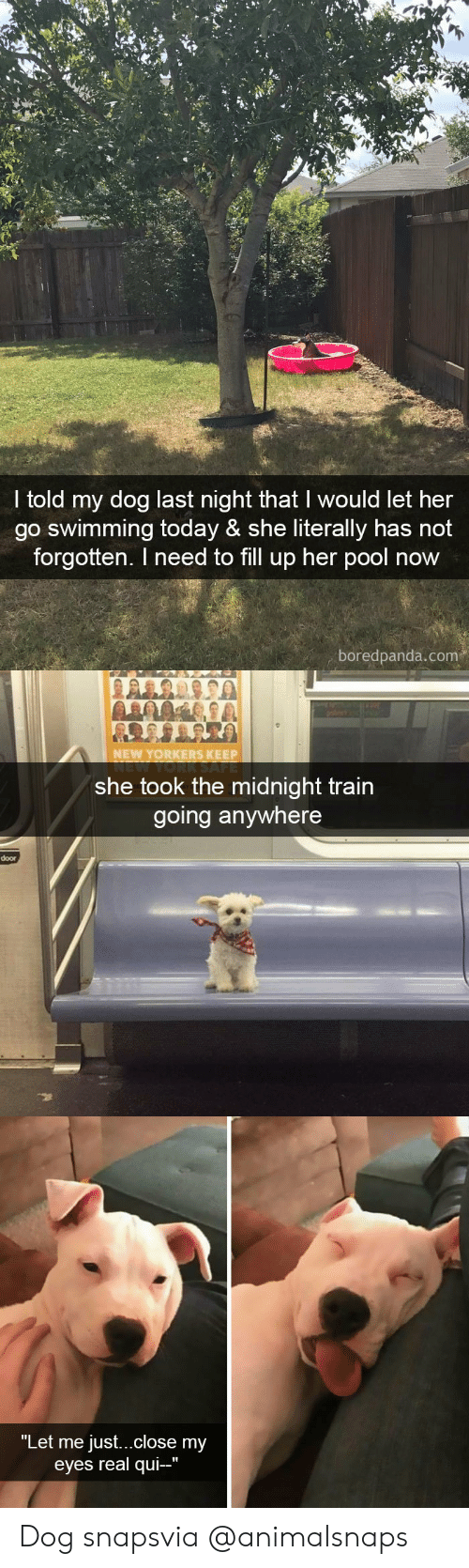 """qui: I told my dog last night that I would let her  go swimming today & she literally has not  forgotten. I need to fill up her pool now  boredpanda.com   NEW YORKERS KEEP  she took the midnight train  going anywhere  door   """"Let me just...close my  eyes real qui-"""" Dog snapsvia @animalsnaps"""