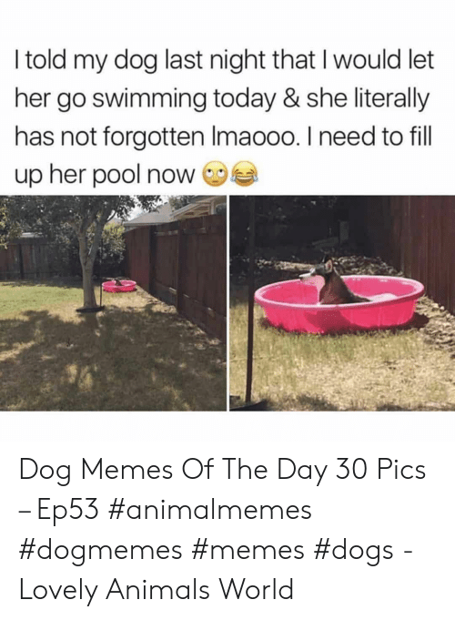 Memes Dogs: I told my dog last night that I would let  her go swimming today & she literally  has not forgotten Imaooo. I need to fill  up her pool now Dog Memes Of The Day 30 Pics – Ep53 #animalmemes #dogmemes #memes #dogs - Lovely Animals World