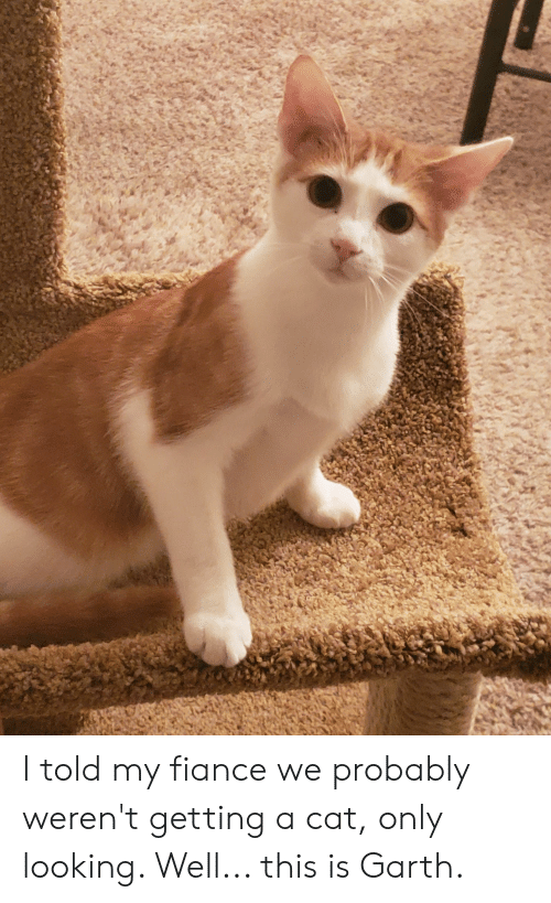 Garth: I told my fiance we probably weren't getting a cat, only looking. Well... this is Garth.