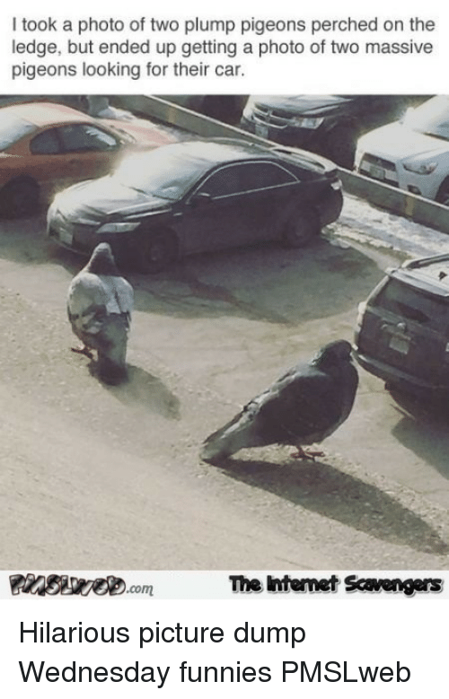 funnies: I took a photo of two plump pigeons perched on the  ledge, but ended up getting a photo of two massive  pigeons looking for their car.  The Intemet Scavengers <p>Hilarious picture dump  Wednesday funnies  PMSLweb </p>