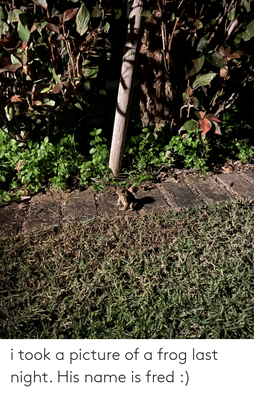 fred: i took a picture of a frog last night. His name is fred :)