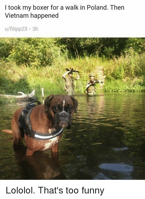 Funny, Memes, and Boxer: I took my boxer for a walk in Poland. Then  Vietnam happened  u/filipp23 3h Lololol. That's too funny