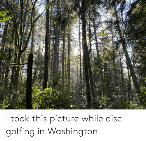 Golfing: I took this picture while disc golfing in Washington