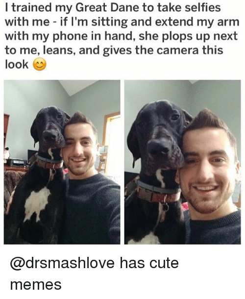 great dane: I trained my Great Dane to take selfies  with me if I'm sitting and extend my arm  with my phone in hand, she plops up next  to me, leans, and gives the camera this  look @drsmashlove has cute memes
