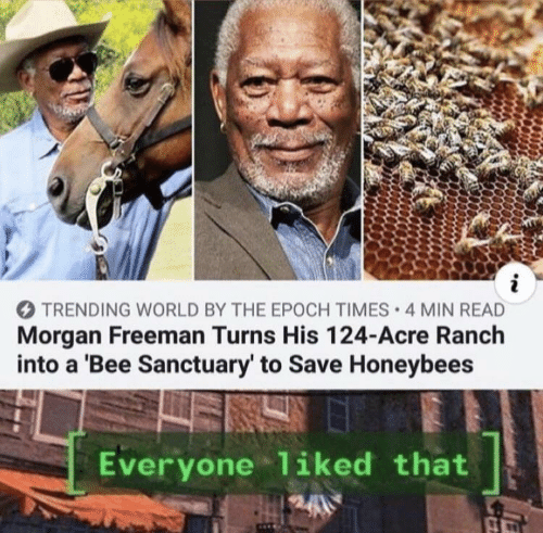 Morgan Freeman: i  TRENDING WORLD BY THE EPOCH TIMES 4 MIN READ  Morgan Freeman Turns His 124-Acre Ranch  into a 'Bee Sanctuary' to Save Honeybees  Everyone liked that