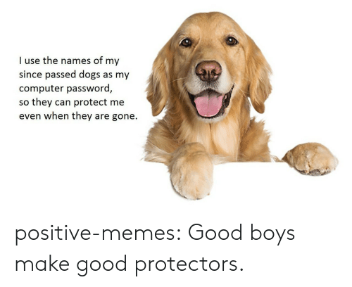 names of: I use the names of my  since passed dogs as my  computer password,  so they can protect me  even when they are gone. positive-memes:  Good boys make good protectors.