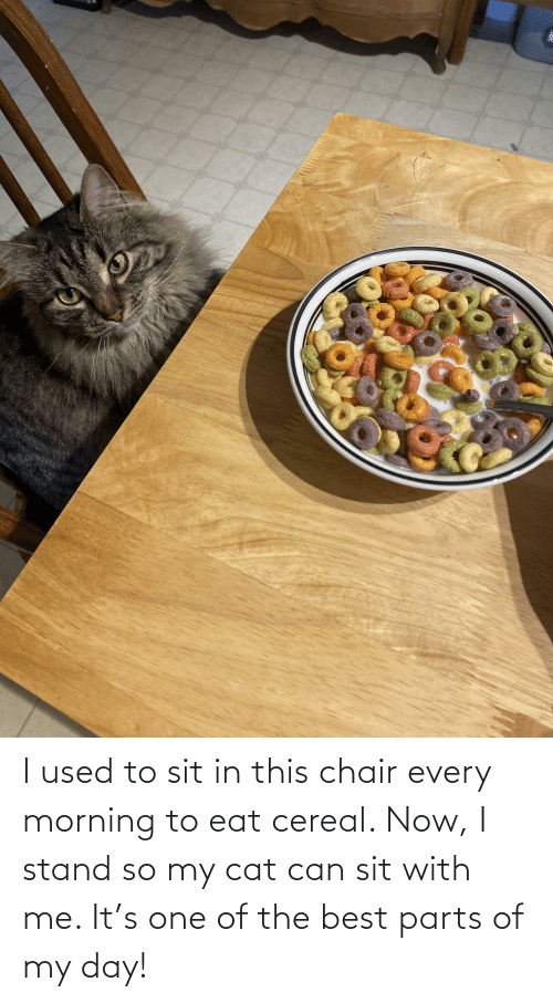 Sit In: I used to sit in this chair every morning to eat cereal. Now, I stand so my cat can sit with me. It's one of the best parts of my day!