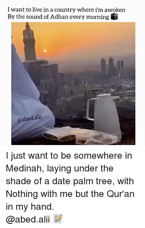 dates: I want to live in a country where i'm awoken  By the sound of Adhan every morning G  @abed. alii I just want to be somewhere in Medinah, laying under the shade of a date palm tree, with Nothing with me but the Qur'an in my hand. ▃▃▃▃▃▃▃▃▃▃▃▃▃▃▃▃▃▃▃▃ @abed.alii 📝