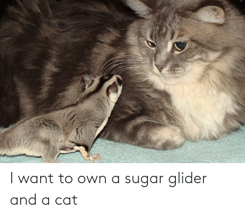 glider: I want to own a sugar glider and a cat