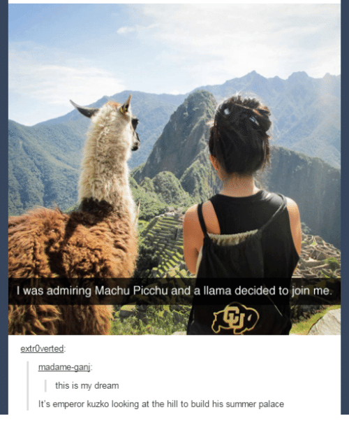extroverted: I was admiring Machu Picchu and a llama decided to join me.  extrOverted  this is my dream  It's emperor kuzko looking at the hill to build his summer palace