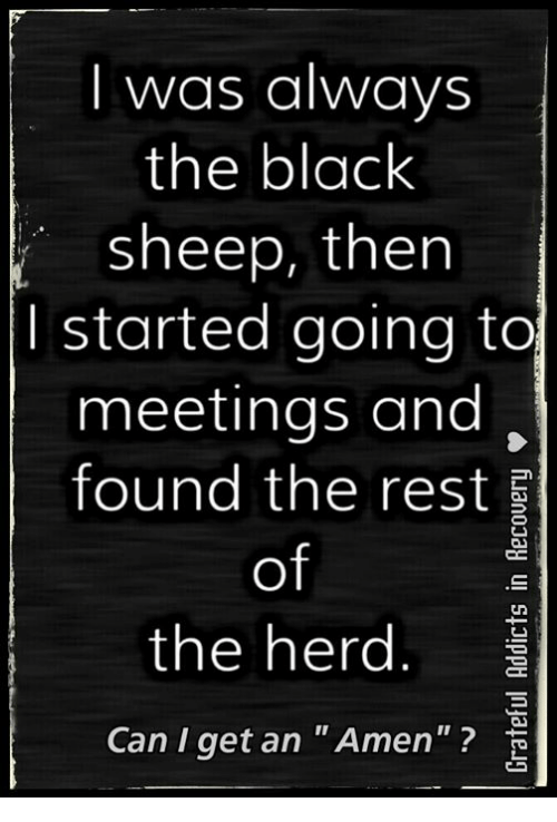 """black sheep: I was always  the black  sheep, then  I started going to  meetings and  found the rest  of  the herd  Can I get an """"Amen"""""""