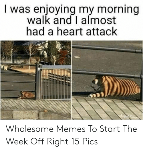 Wholesome Memes: I was enjoying my morning  walk and I almost  had a heart attack Wholesome Memes To Start The Week Off Right 15 Pics