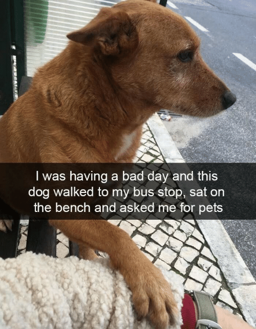 bus stop: I was having a bad day and this  dog walked to my bus stop, sat on  the bench and asked me for pets