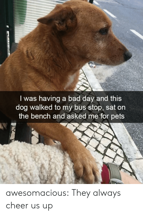bus stop: I was having a bad day and this  dog walked to my bus stop, sat on  the bench and asked me for pets awesomacious:  They always cheer us up