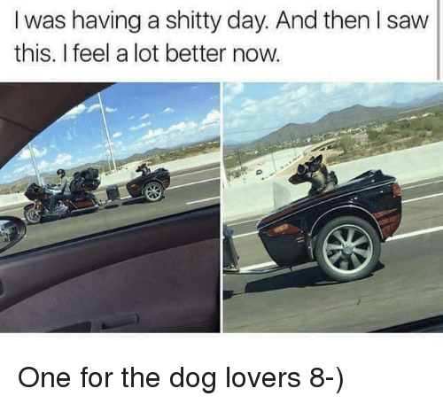 dog lovers: I was having a shitty day. And then saw  this. I feel a lot better now. One for the dog lovers 8-)
