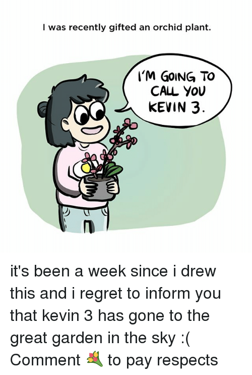 Memes, Regret, and Been: I was recently gifted an orchid plant.  I'M GoING TO  CALL YouU  KEVIN 3  邝 it's been a week since i drew this and i regret to inform you that kevin 3 has gone to the great garden in the sky :( Comment 💐 to pay respects