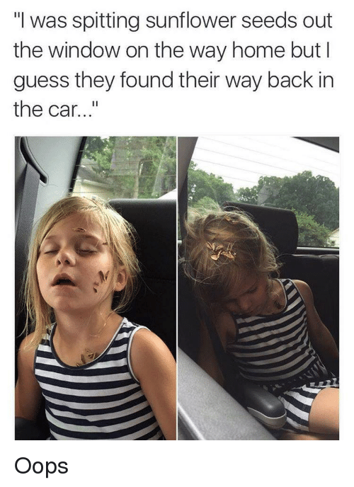 """Sunflower Seed: """"I was spitting sunflower seeds out  the window on the way home but I  guess they found their way back in  the car Oops"""