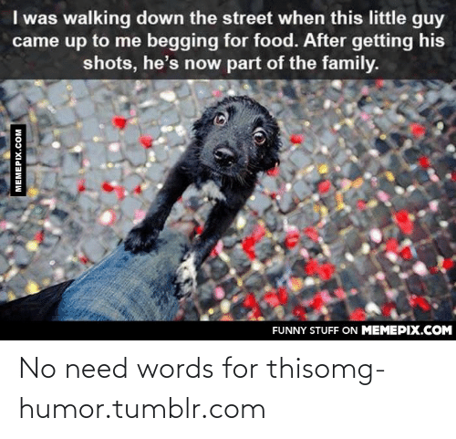 Begging For Food: I was walking down the street when this little guy  came up to me begging for food. After getting his  shots, he's now part of the family.  FUNNY STUFF ON MEMEPIX.COM  MEMEPIX.COM No need words for thisomg-humor.tumblr.com