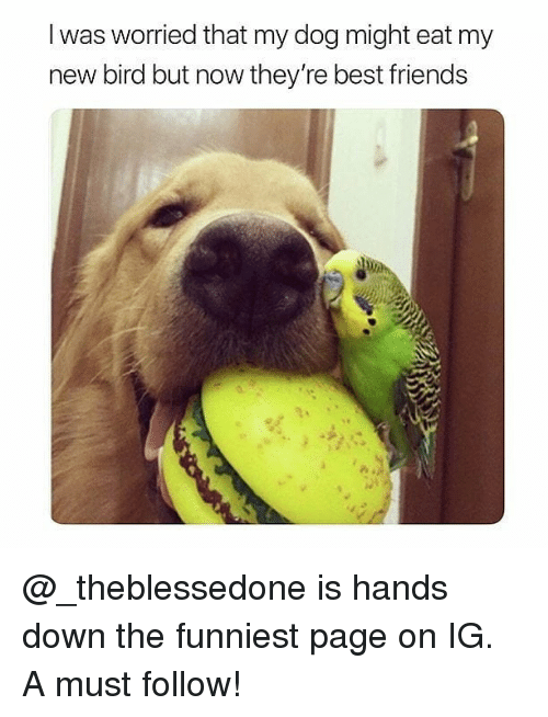 Friends, Memes, and Best: I was worried that my dog might eat my  new bird but now they're best friends @_theblessedone is hands down the funniest page on IG. A must follow!
