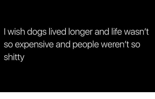 Dogs, Life, and Memes: I wish dogs lived longer and life wasn't  so expensive and people weren't so  shitty