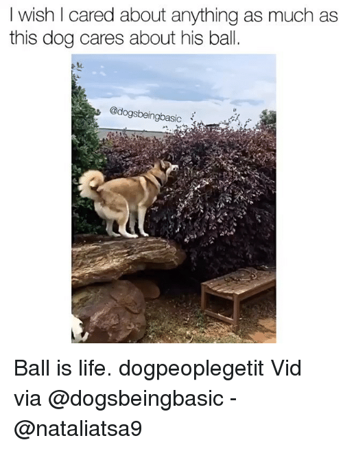 Ball Is Life, Life, and Memes: I wish I cared about anything as much as  this dog cares about his bal  @dogsbeingbasic Ball is life. dogpeoplegetit Vid via @dogsbeingbasic - @nataliatsa9