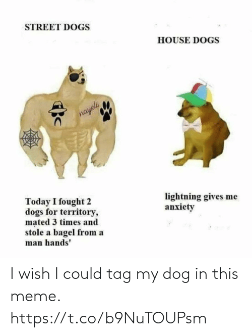 meme: I wish I could tag my dog in this meme. https://t.co/b9NuTOUPsm
