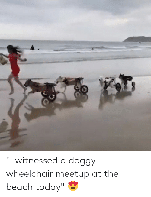"""Meetup: """"I witnessed a doggy wheelchair meetup at the beach today"""" 😍"""