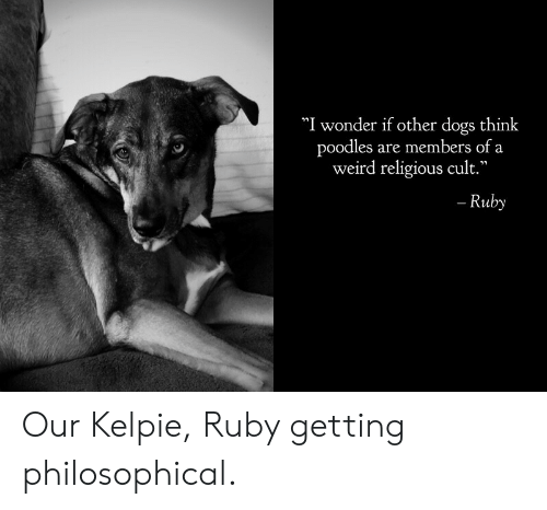 """cult: """"I wonder if other dogs think  poodles are members of a  weird religious cult.""""  - Ruby Our Kelpie, Ruby getting philosophical."""