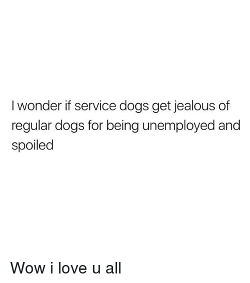 Dogs, Jealous, and Love: I wonder if service dogs get jealous of  regular dogs for being unemployed and  Spoiled Wow i love u all