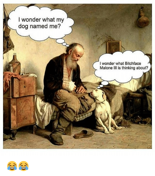 Memes, Wonder, and 🤖: I wonder what my  dog named me?  I wonder what Bitchface  Malone Ill is thinking about? 😂😂