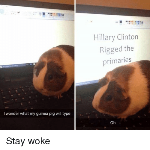 stay woke: I wonder what my guinea pig will type  Hillary Clinton  Rigged the  primaries  Oh Stay woke